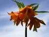 0031-aigul-flower