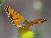 0016-butterflies