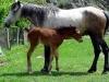 0023-horses
