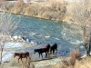 0121-horses-fording-the-river